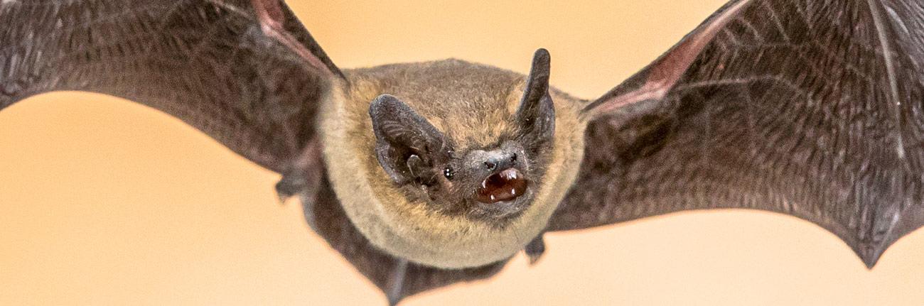 How to Survive A Bat