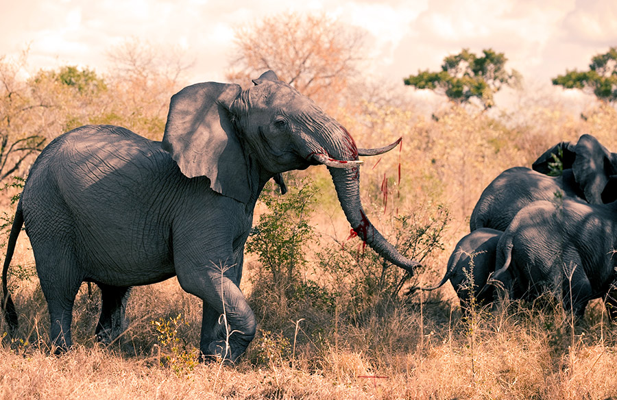 elephant charge 3