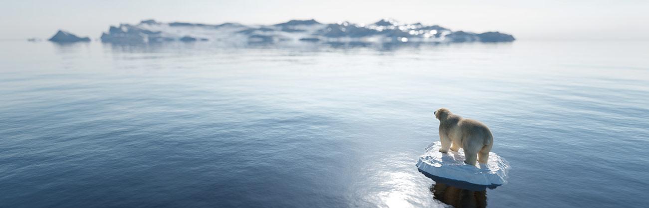 polar bear survival strategies