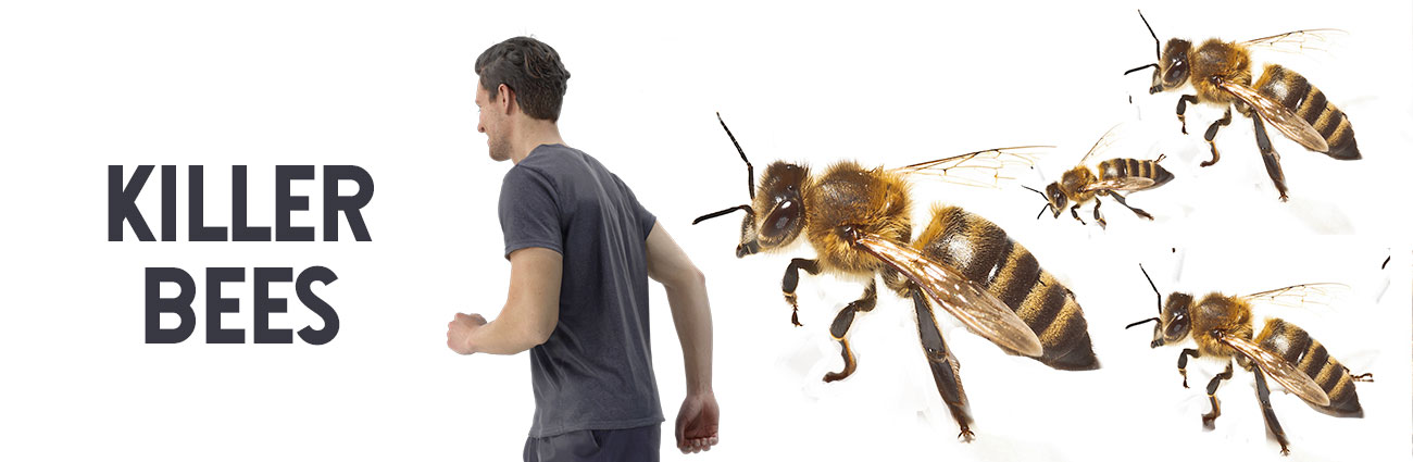 surviving killer bees long