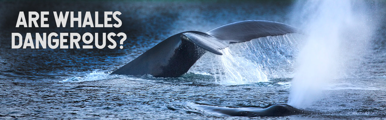 Are Whales Dangerous